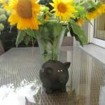 Unser Hausschwein auf der Terrasse